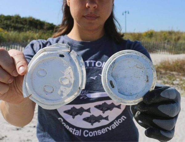 Pollution plastique des océans : opération de nettoyage de plage