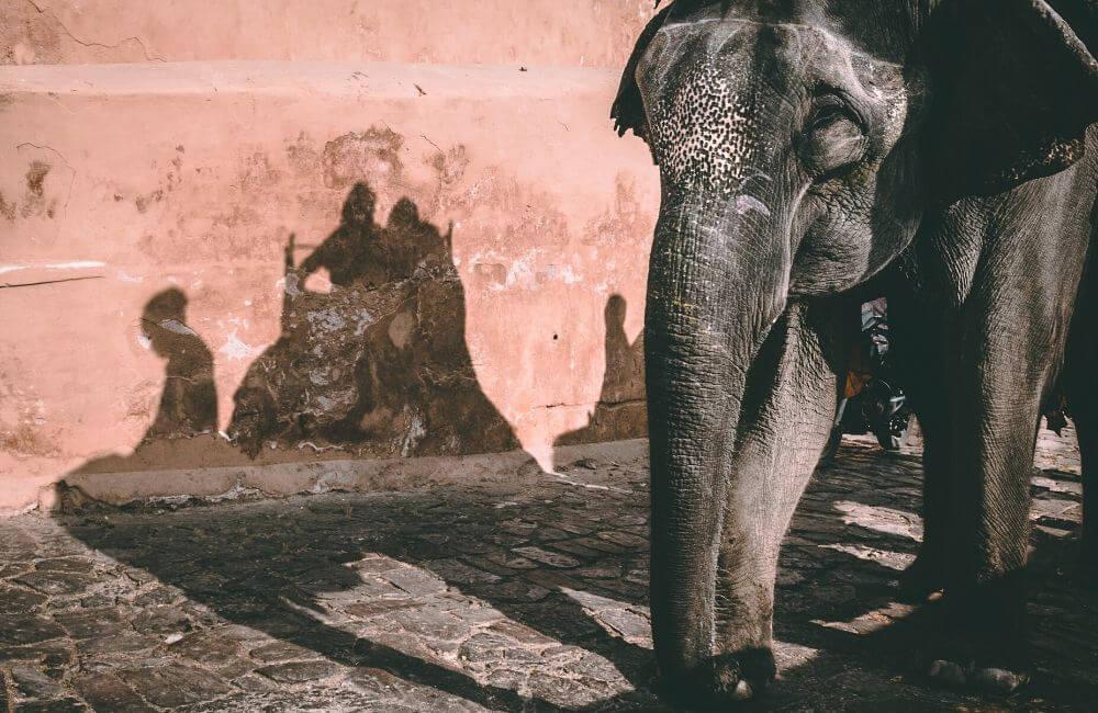 Dangers des promenades sur les éléphants