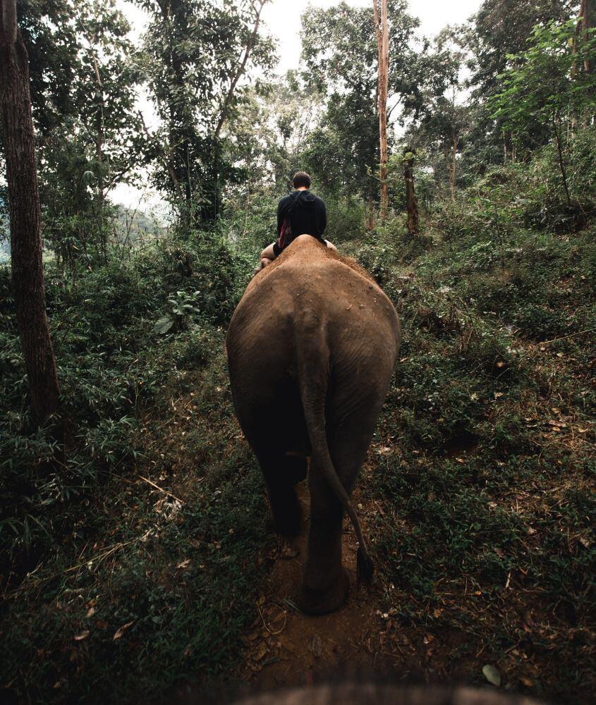 Trek à dos d'éléphant dans la jungle