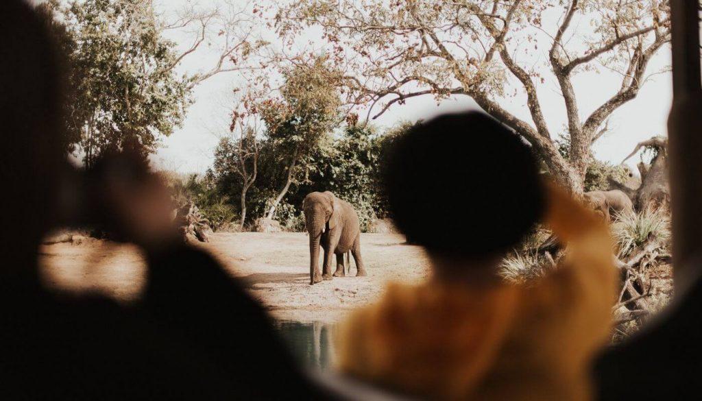 Dangers des treks à dos d'éléphants