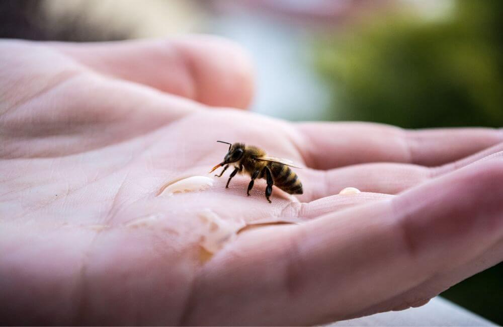 8 gestes pour sauver les abeilles sauvages