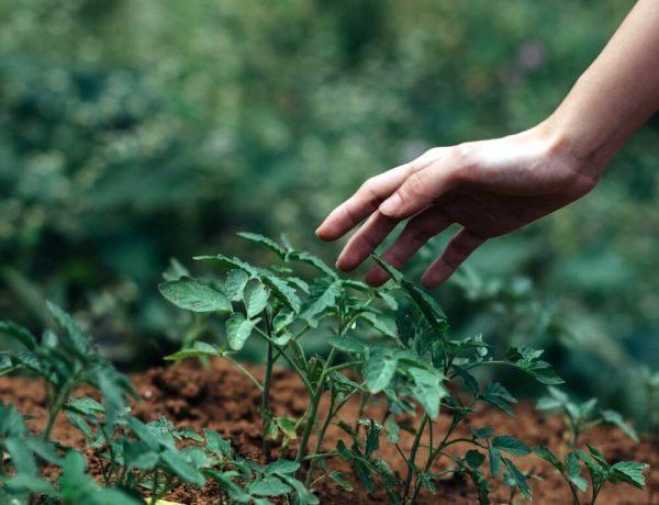 Culpabilisation écologique : les petits gestes ne vont pas sauver le monde