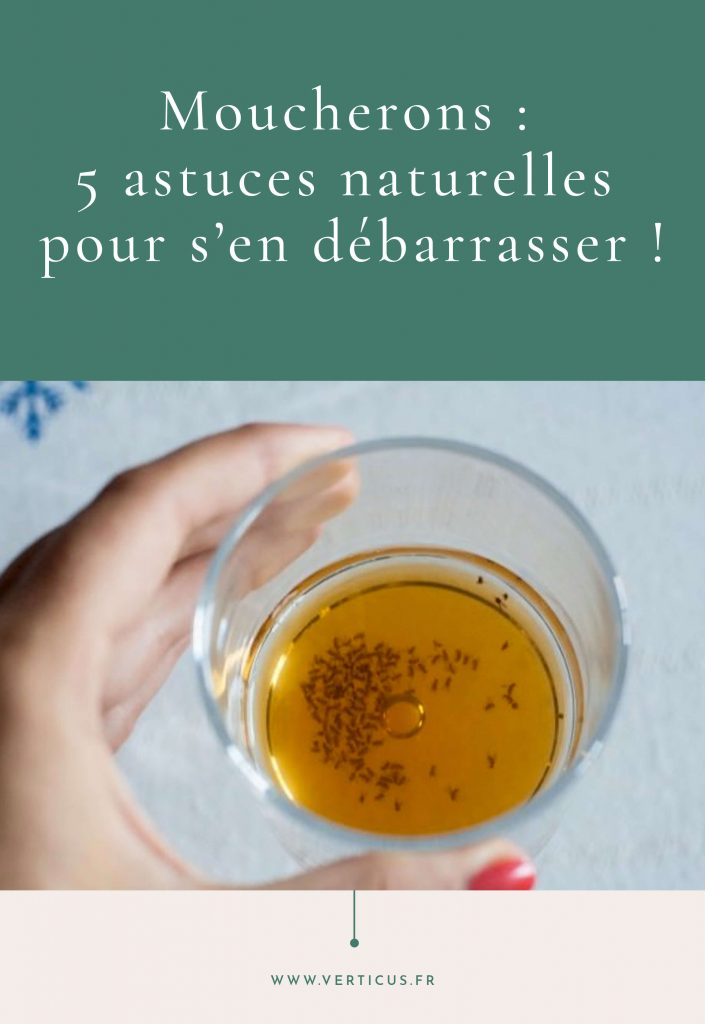 Moucherons : huiles essentielles et astuces naturelles pour s'en débarrasser