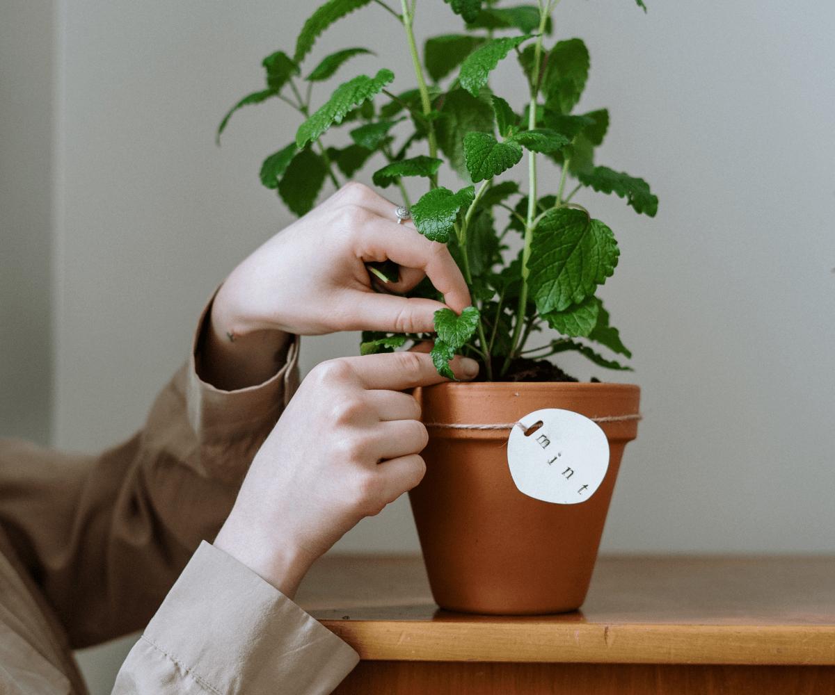 4 recettes d'engrais naturels pour des plantes en bonne santé