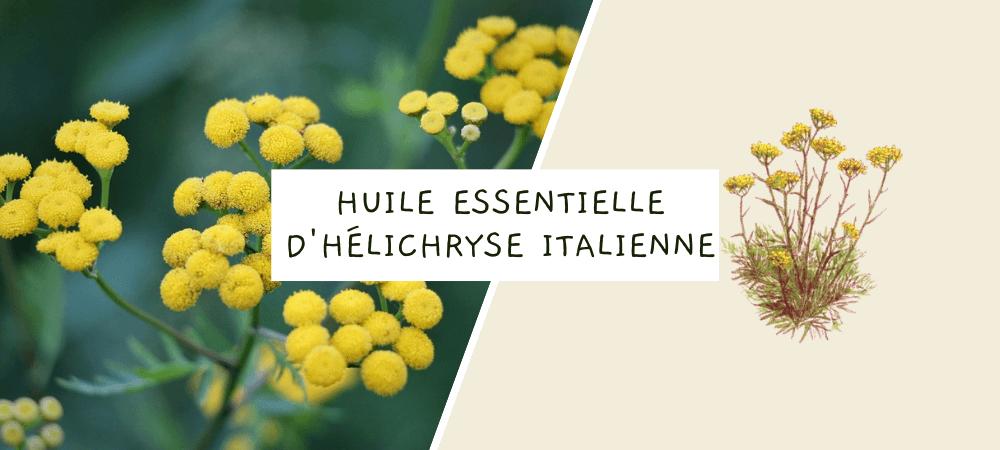 Huile essentielle de hélichryse italienne : propriétés, bienfaits et utilisation