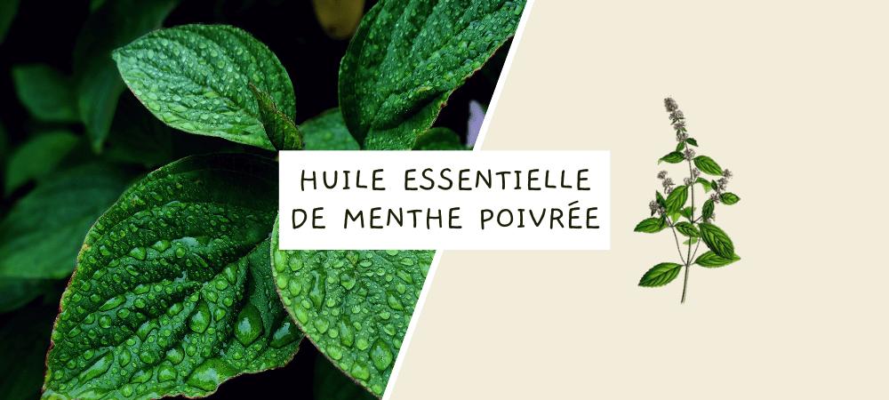 Huile essentielle de menthe poivrée : propriétés, bienfaits et utilisation